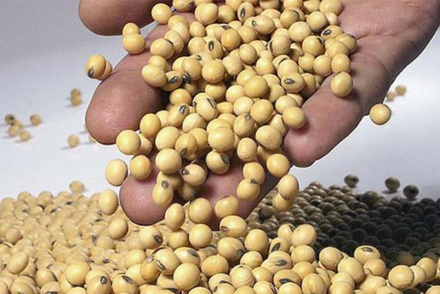 A soja faz parte dos alimentos com fitohormônios