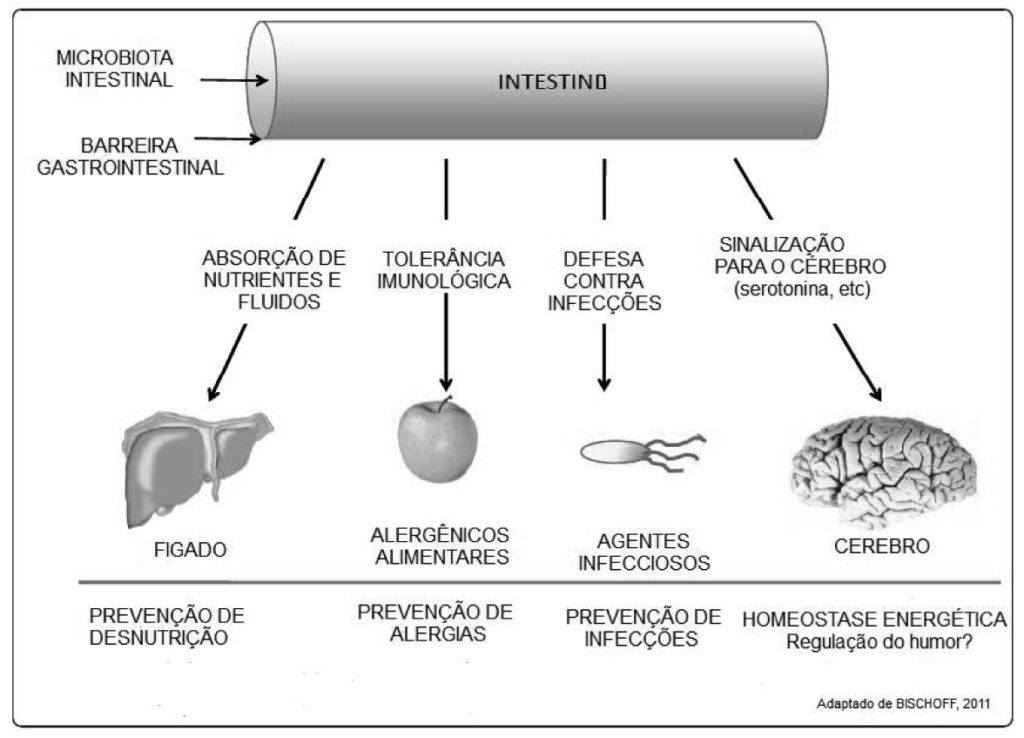 probioticos-intestino-saude-do-organismo