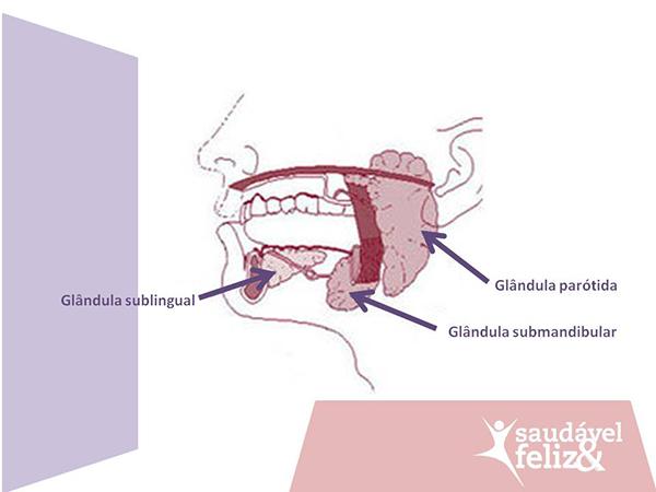 glandulas-salivares-e-a-caxumba
